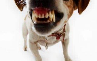 abogado mordida de perro