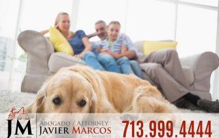 Reclamo mordida de perro   Abogado Javier Marcos 713.999.4444