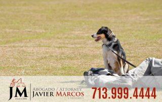 Leyes de correa para perros | Abogado Javier Marcos 713.999.4444