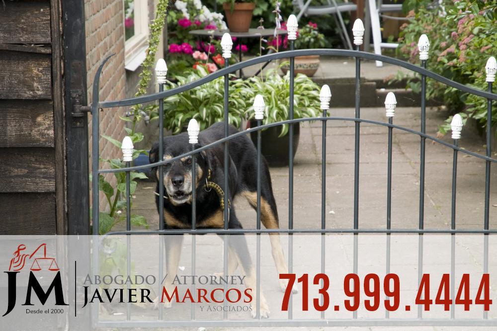 Demanda por mordida de perro | Abogado Javier Marcos 713.999.4444
